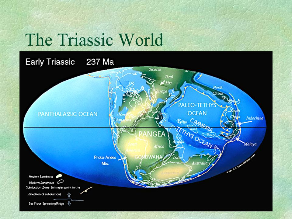 The Triassic World