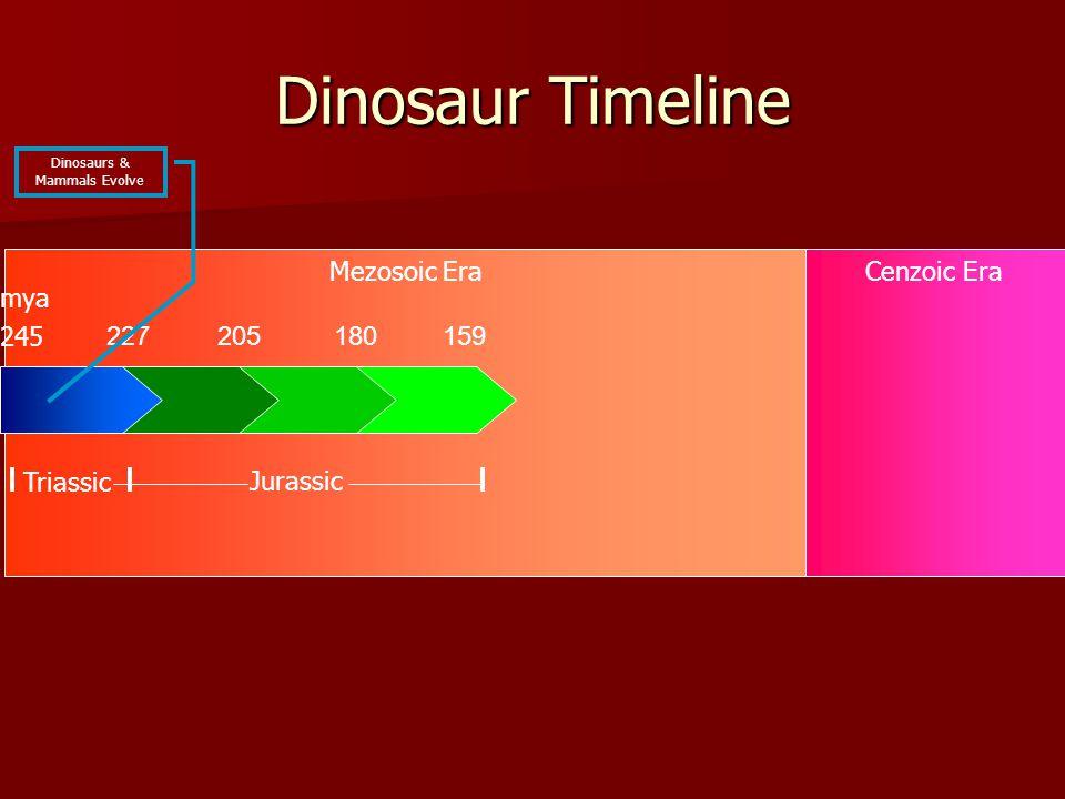 Mezosoic EraCenzoic Era Dinosaur Timeline 227205180159 245 Triassic Jurassic mya Dinosaurs & Mammals Evolve