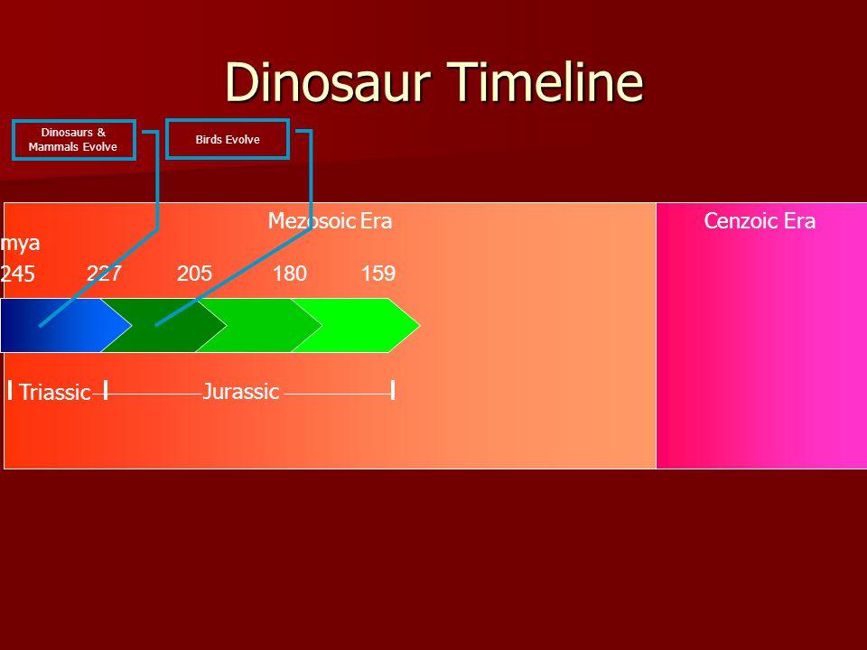 Mezosoic EraCenzoic Era Dinosaur Timeline 227205180159 245 Triassic Jurassic mya Dinosaurs & Mammals Evolve Birds Evolve
