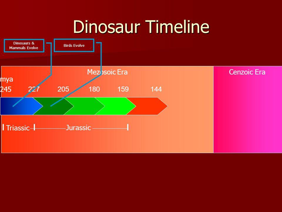Mezosoic EraCenzoic Era Dinosaur Timeline 227205180159144 245 Triassic Jurassic mya Dinosaurs & Mammals Evolve Birds Evolve