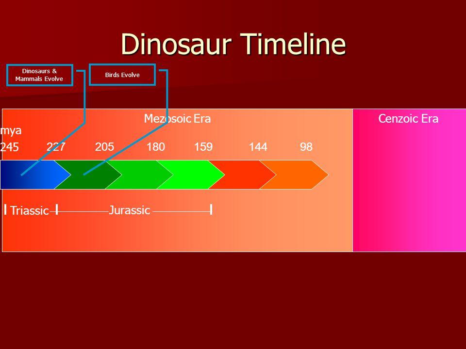 Mezosoic EraCenzoic Era Dinosaur Timeline 22720518015914498 245 Triassic Jurassic mya Dinosaurs & Mammals Evolve Birds Evolve
