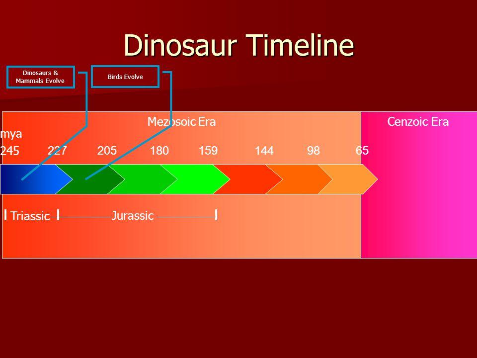 Mezosoic EraCenzoic Era Dinosaur Timeline 2272051801591449865 245 Triassic Jurassic mya Dinosaurs & Mammals Evolve Birds Evolve