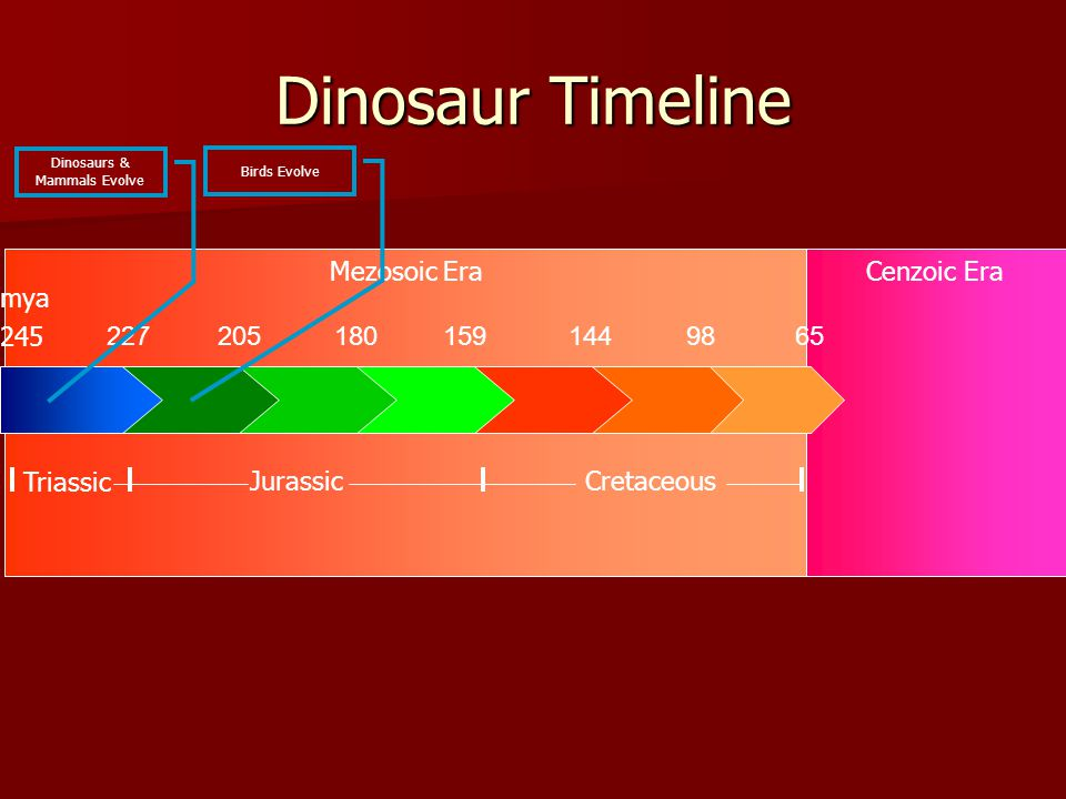 Mezosoic EraCenzoic Era Dinosaur Timeline 2272051801591449865 245 Triassic CretaceousJurassic mya Dinosaurs & Mammals Evolve Birds Evolve