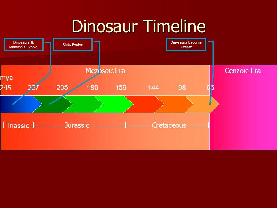 Mezosoic EraCenzoic Era Dinosaur Timeline 2272051801591449865 245 Triassic CretaceousJurassic mya Dinosaurs & Mammals Evolve Birds Evolve Dinosaurs Be