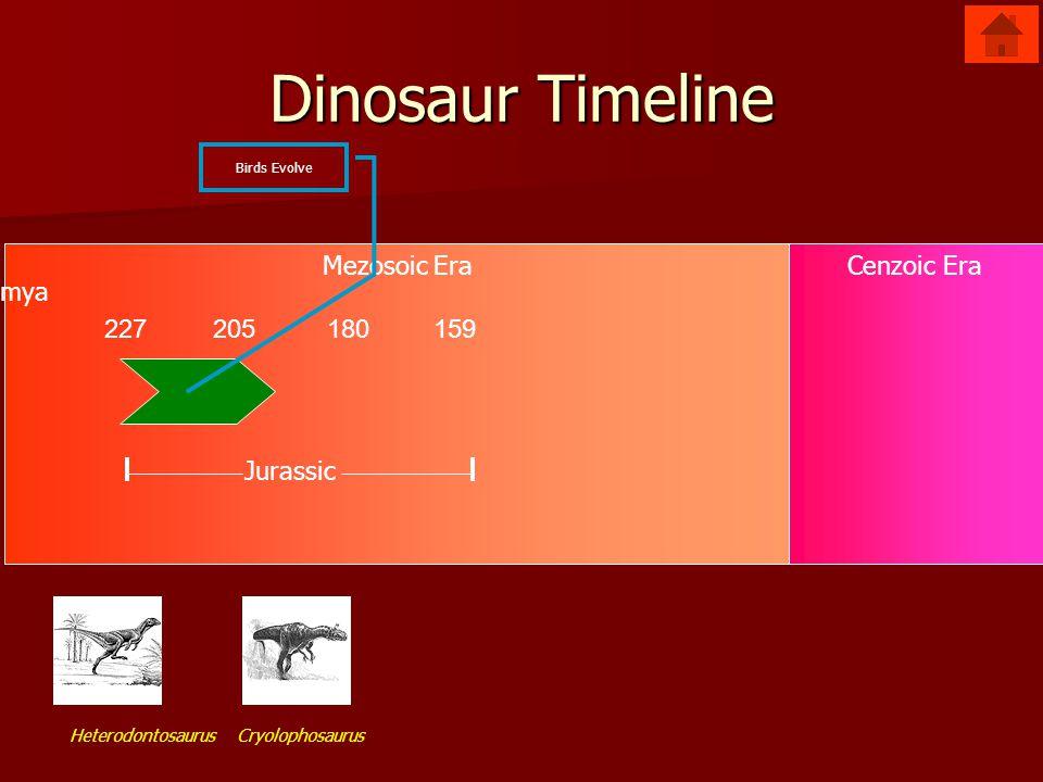 Mezosoic EraCenzoic Era Dinosaur Timeline 227205180159 Jurassic mya Birds Evolve Cryolophosaurus Heterodontosaurus