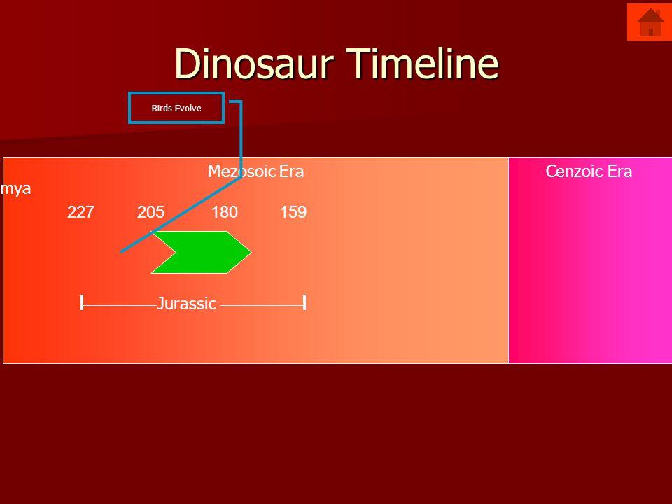 Mezosoic EraCenzoic Era Dinosaur Timeline 227205180159 Jurassic mya Birds Evolve