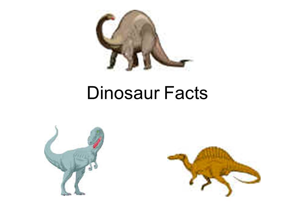 essay on dinosaurs for kids Extinction of dinosaurs two-hundred and thirty million years ago the first dinosaur-like creature roamed the earth dinosaurs were a very successful and diverse group, dominating the terrestrial environments of the earth for 160 million years.