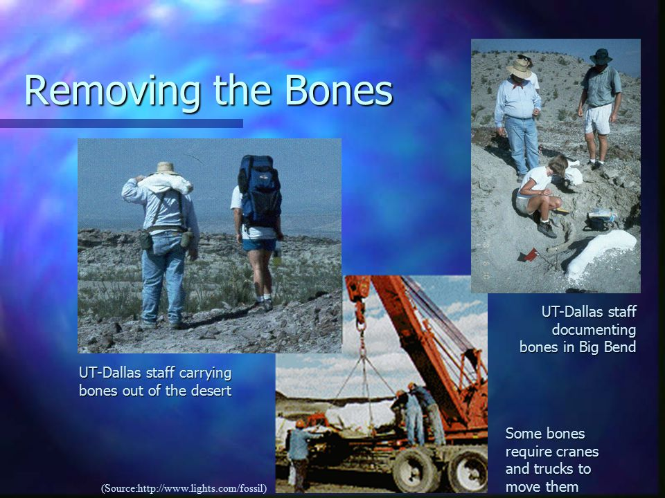 Removing the Bones UT-Dallas staff carrying bones out of the desert UT-Dallas staff documenting bones in Big Bend Some bones require cranes and trucks to move them (Source:http://www.lights.com/fossil)