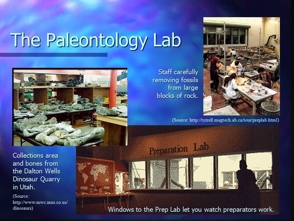 The Paleontology Lab (Source: http://tyrrell.magtech.ab.ca/tour/preplab.html) Collections area and bones from the Dalton Wells Dinosaur Quarry in Utah.