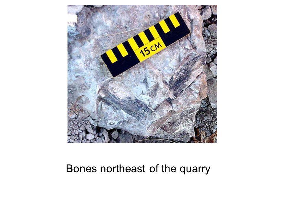 Bones northeast of the quarry