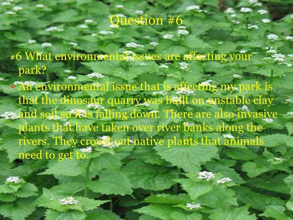 Question #6 # 6 What environmental issues are affecting your park.