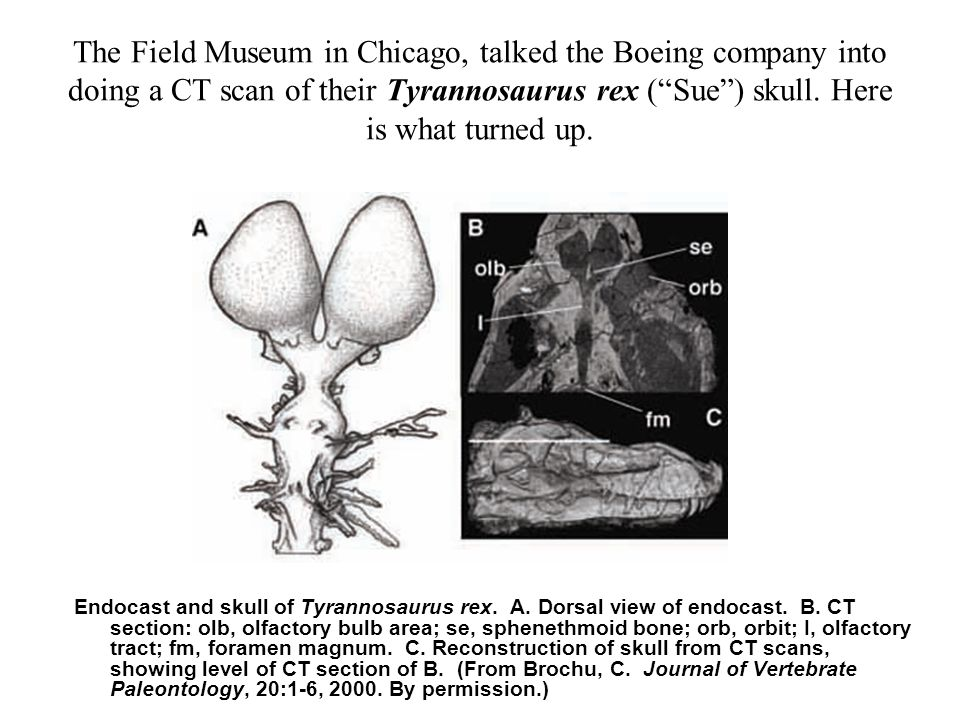 The Field Museum in Chicago, talked the Boeing company into doing a CT scan of their Tyrannosaurus rex ( Sue ) skull.