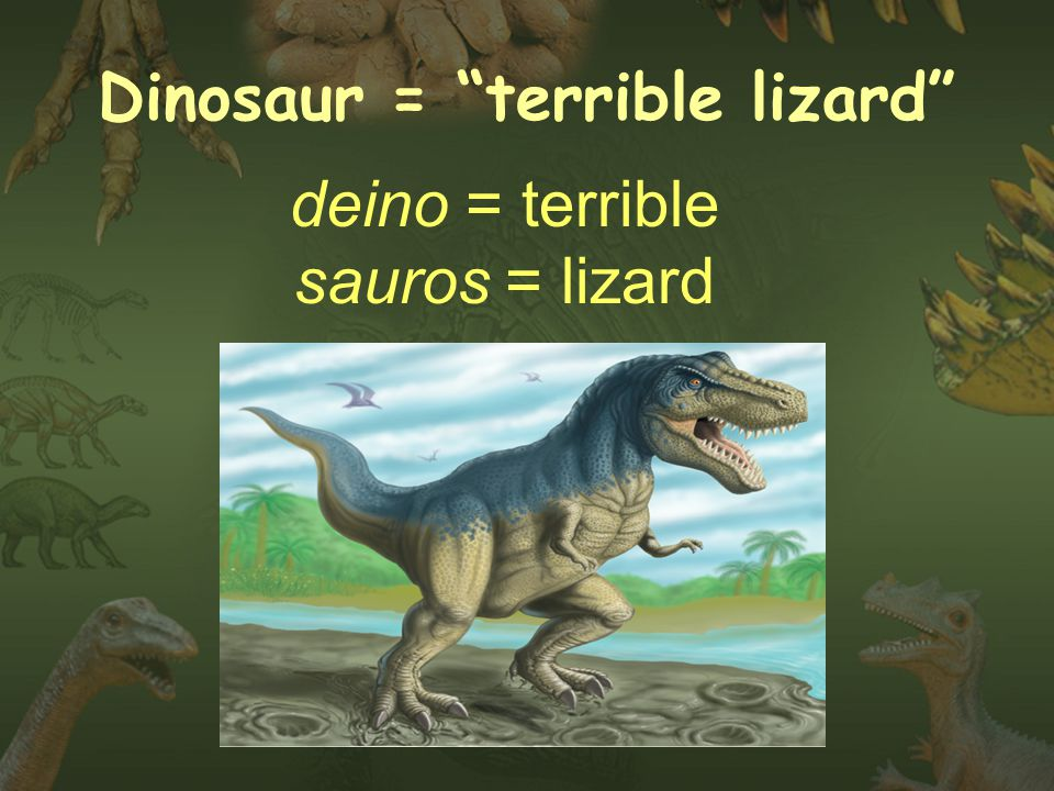Dinosaur = terrible lizard deino = terrible sauros = lizard