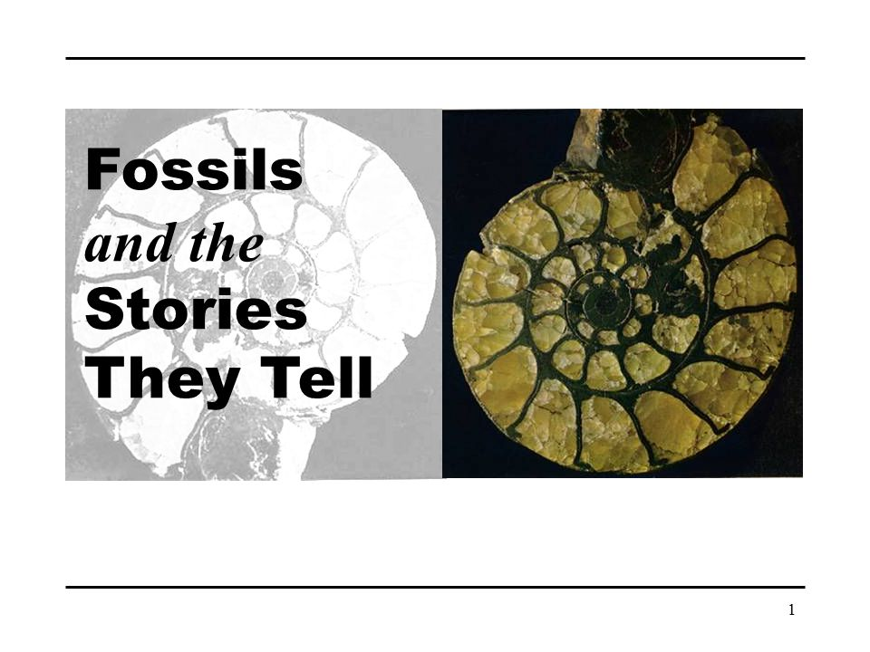 1 Fossils and the Stories They Tell