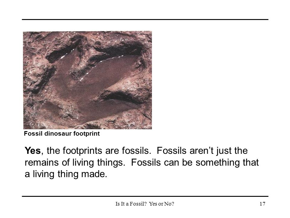 Is It a Fossil? Yes or No?17 Fossil dinosaur footprint Yes, the footprints are fossils. Fossils aren't just the remains of living things. Fossils can