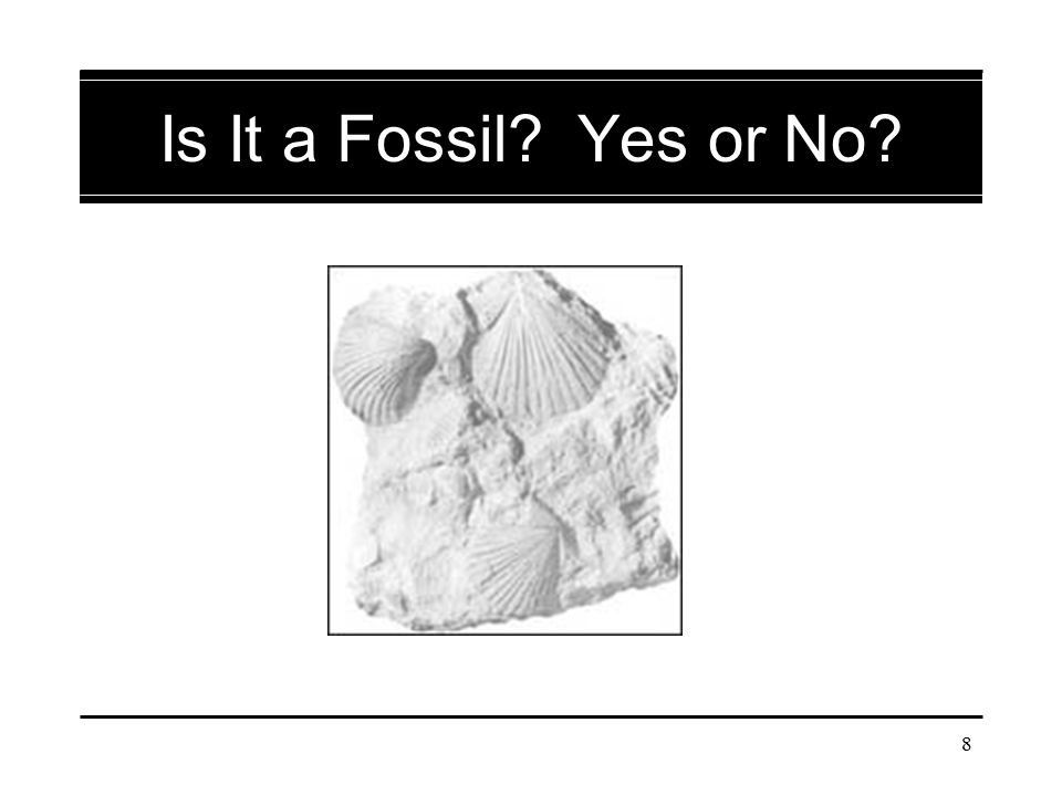 39 Is It a Fossil? Yes or No?