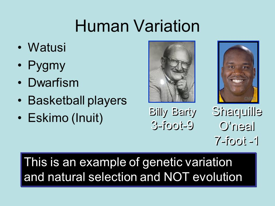 Human Variation Watusi Pygmy Dwarfism Basketball players Eskimo (Inuit) Billy Barty 3-foot-9 Shaquille O'neal 7-foot -1 This is an example of genetic variation and natural selection and NOT evolution