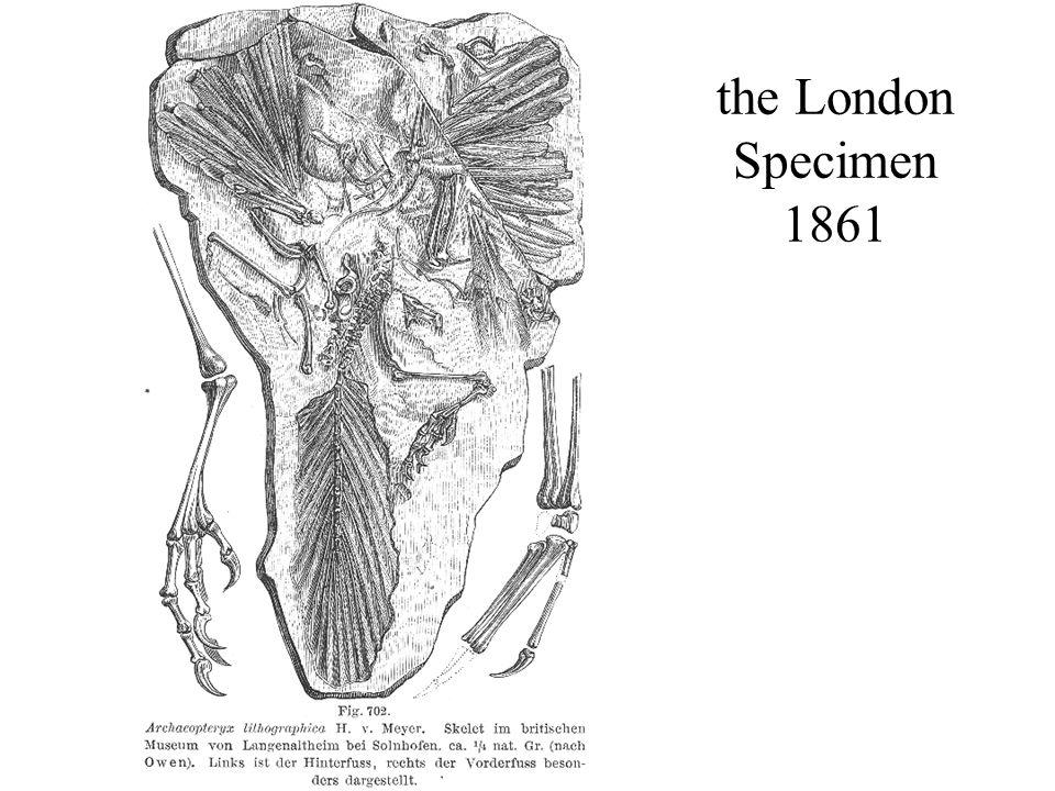 the London Specimen 1861