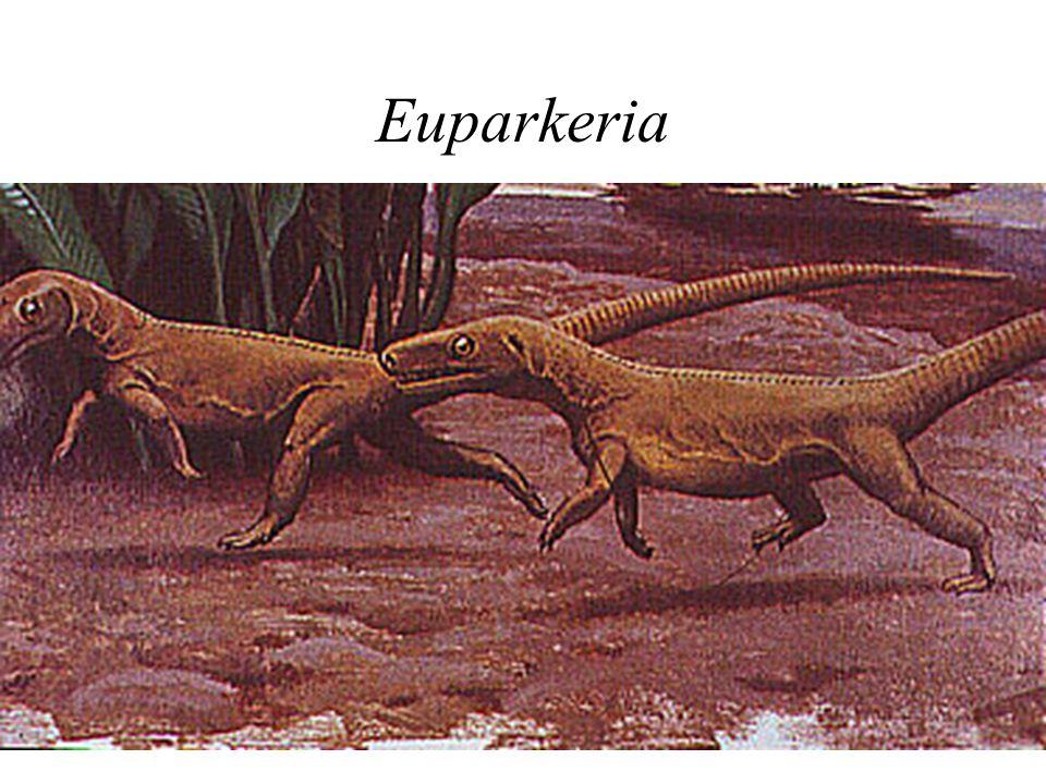 Euparkeria