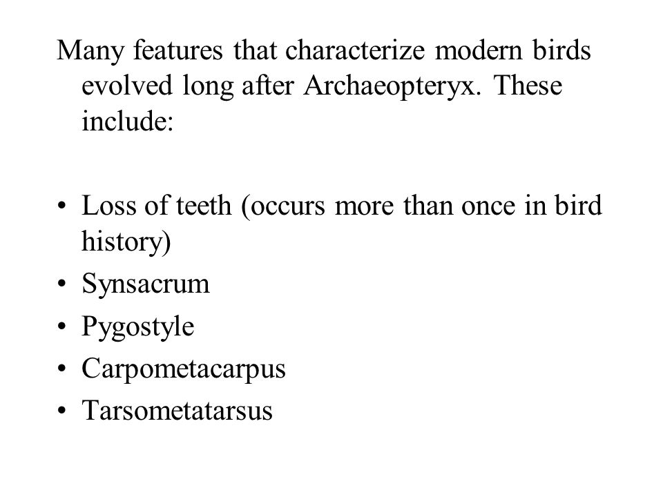 Many features that characterize modern birds evolved long after Archaeopteryx. These include: Loss of teeth (occurs more than once in bird history) Sy