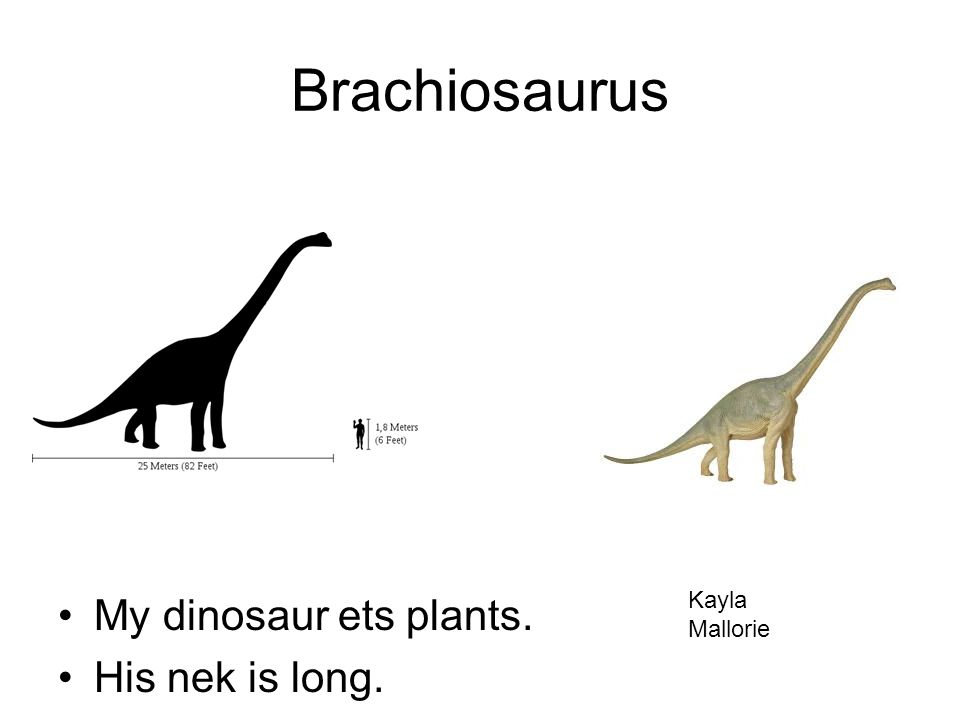 Brachiosaurus My dinosaur ets plants. His nek is long. Kayla Mallorie