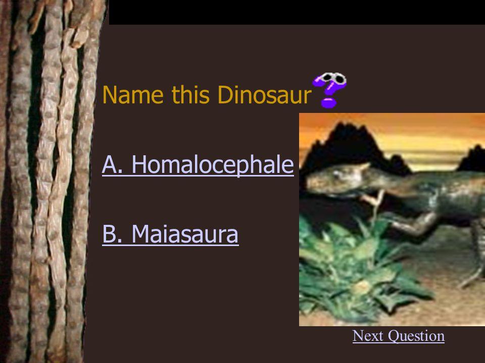 Correct B. BrachiosaurusBrachiosaurus Back