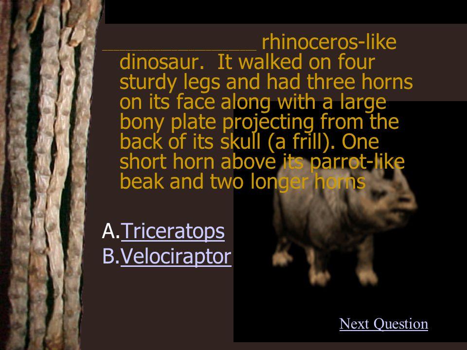 A. OviraptorOviraptor Back Correct