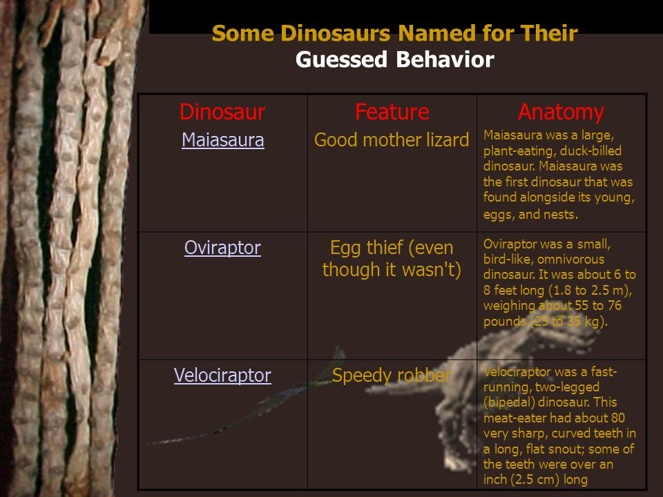 Credits http://www.enchantedlearning.com/Home.html http://members.tripod.com/~tmt/dinosaur-1.html http://www.encyberpedia.com/dinos.htm