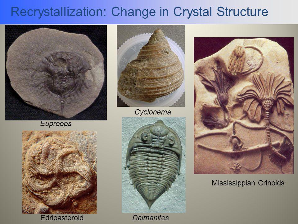 Recrystallization: Change in Crystal Structure Mississippian Crinoids Dalmanites Cyclonema Euproops Edrioasteroid