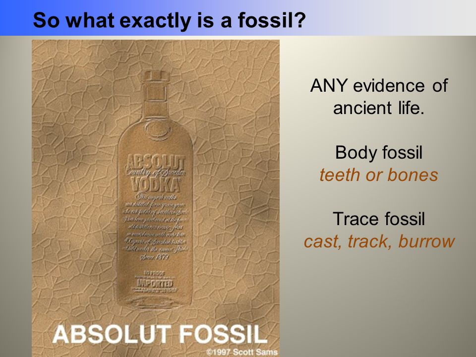 So what exactly is a fossil? ANY evidence of ancient life. Body fossil teeth or bones Trace fossil cast, track, burrow