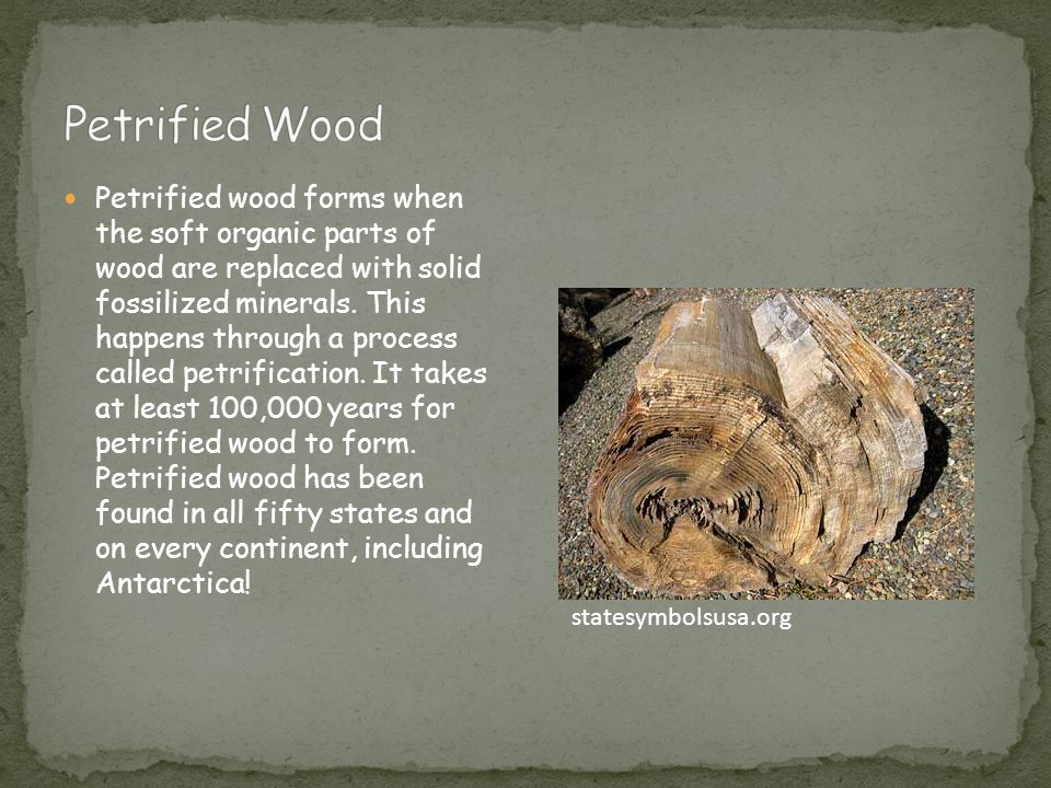 Petrified wood forms when the soft organic parts of wood are replaced with solid fossilized minerals. This happens through a process called petrificat