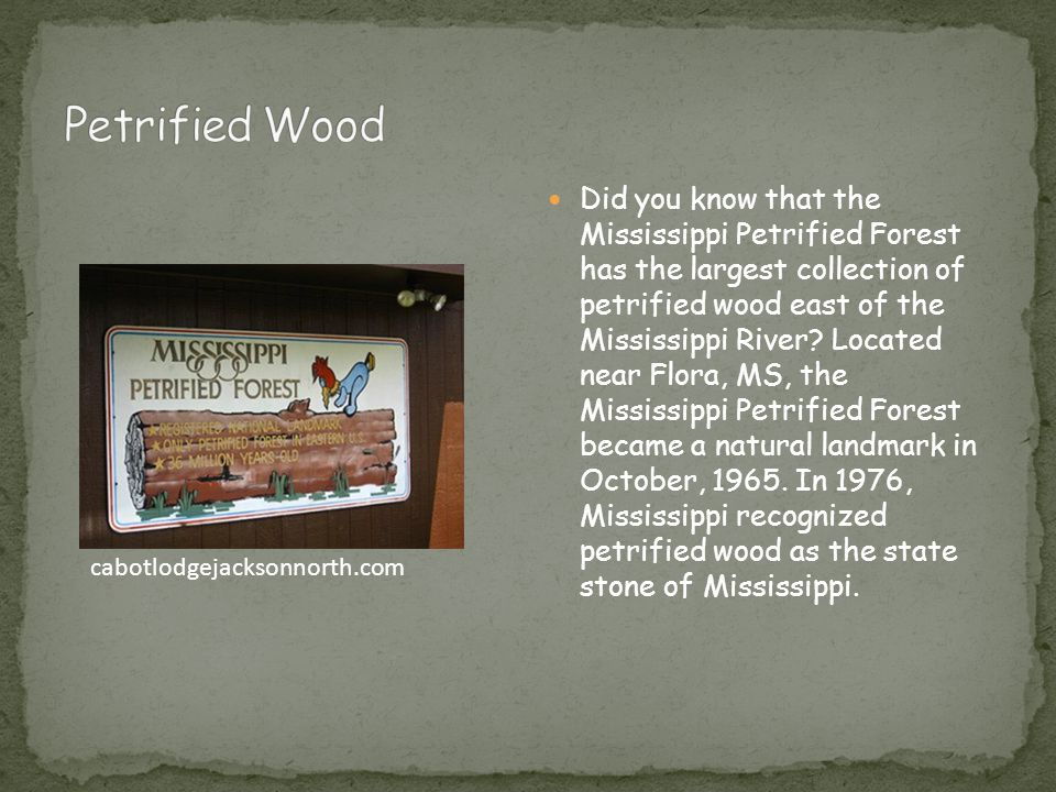 Did you know that the Mississippi Petrified Forest has the largest collection of petrified wood east of the Mississippi River.
