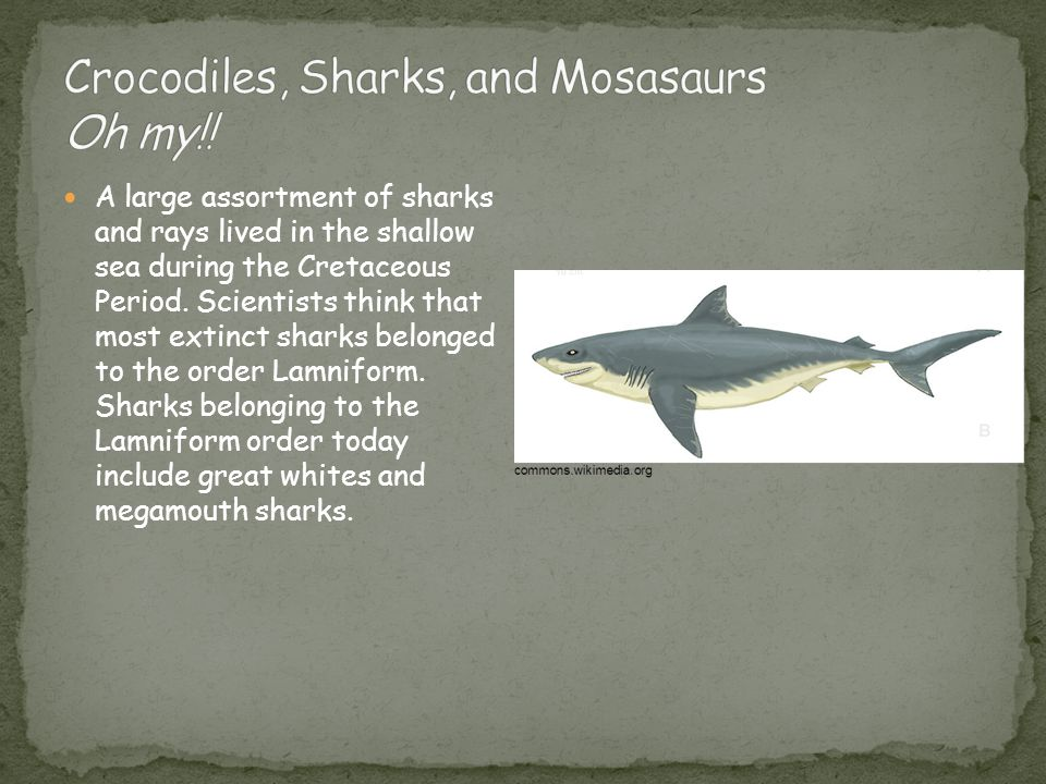 A large assortment of sharks and rays lived in the shallow sea during the Cretaceous Period.