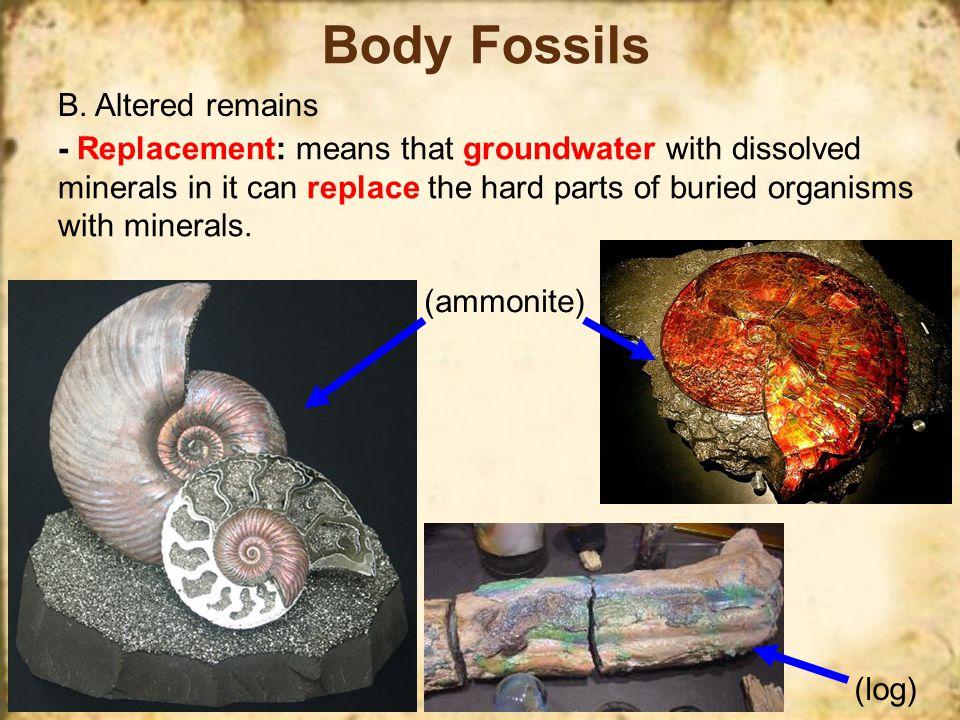 Body Fossils B.