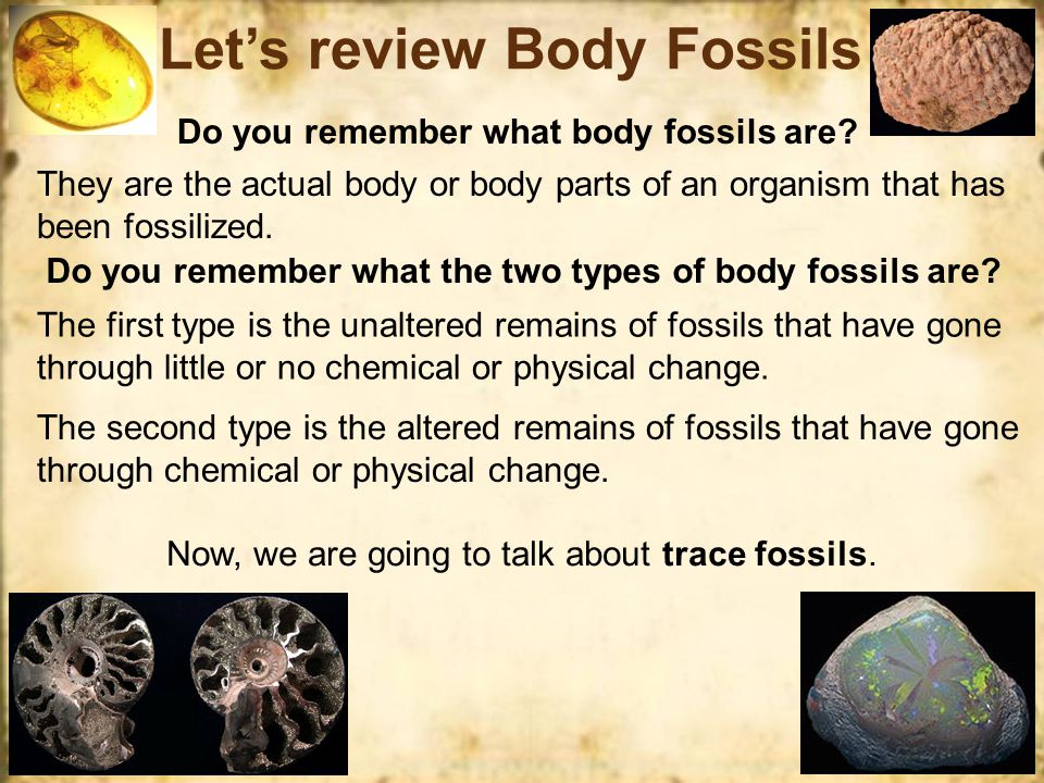 Body Fossils Let's review the four main types of altered remains of fossils… Altered remains of fossils means that the organisms have gone through chemical or physical change and must be at least ten thousand years old.