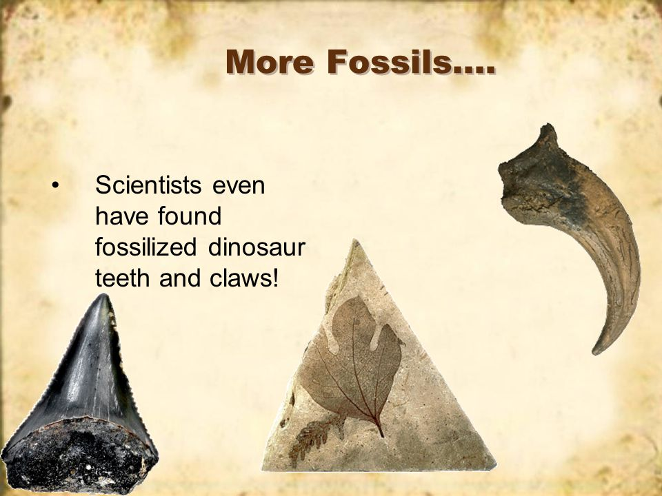 Fossils, big or small…. Fossils can be very large or very small