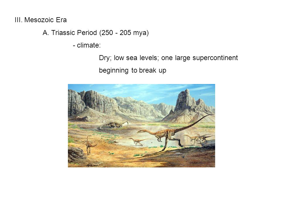 III.Mesozoic Era A. Triassic Period (250 - 205 mya) B.