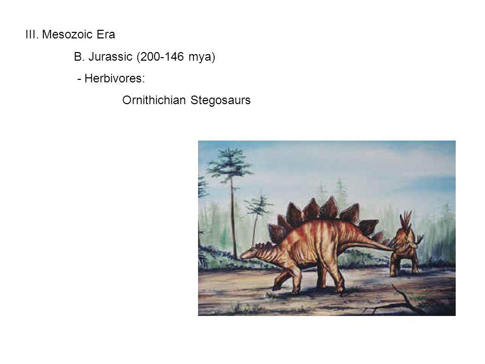III. Mesozoic Era B. Jurassic (200-146 mya) - Herbivores: Ornithichian Stegosaurs