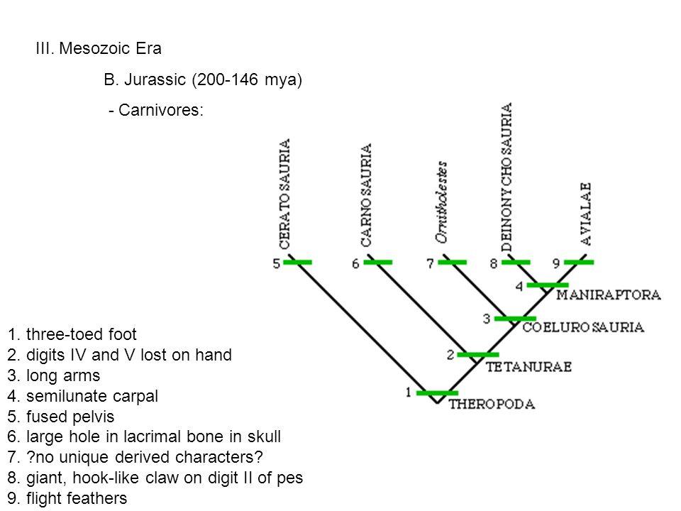 III. Mesozoic Era B. Jurassic (200-146 mya) - Carnivores: 1.