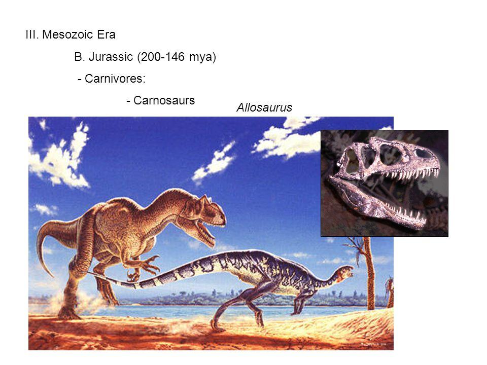 III. Mesozoic Era B. Jurassic (200-146 mya) - Carnivores: - Carnosaurs Allosaurus