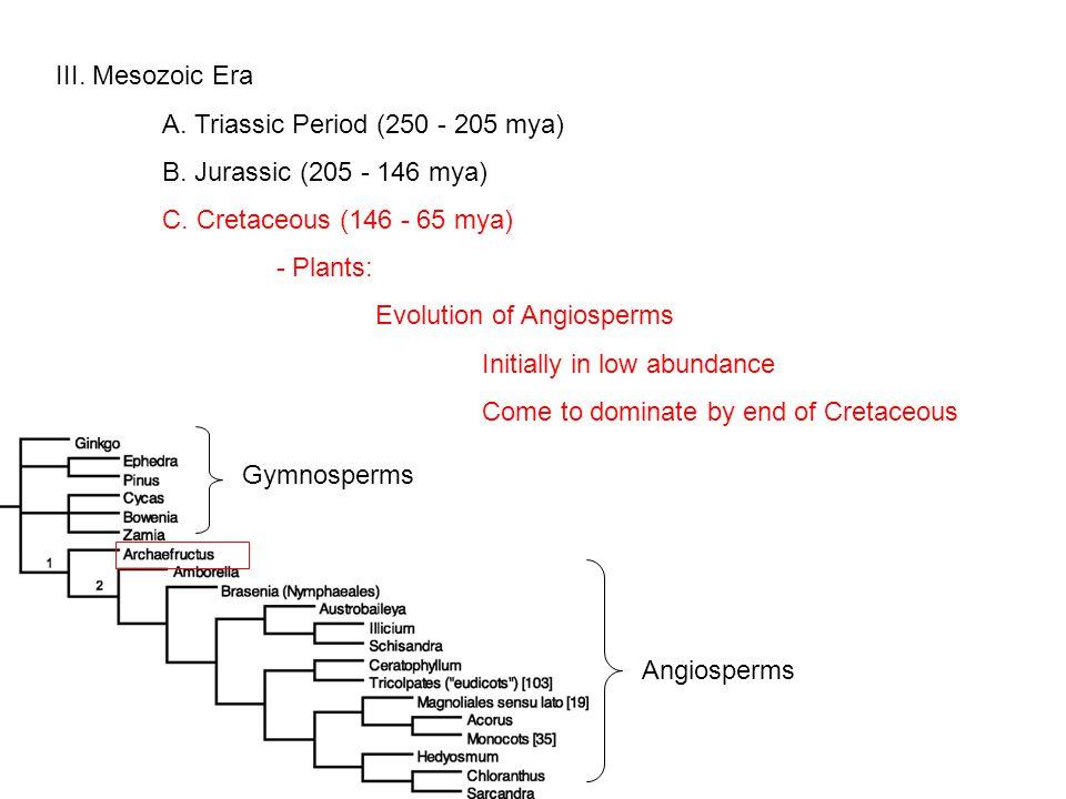 III. Mesozoic Era A. Triassic Period (250 - 205 mya) B.