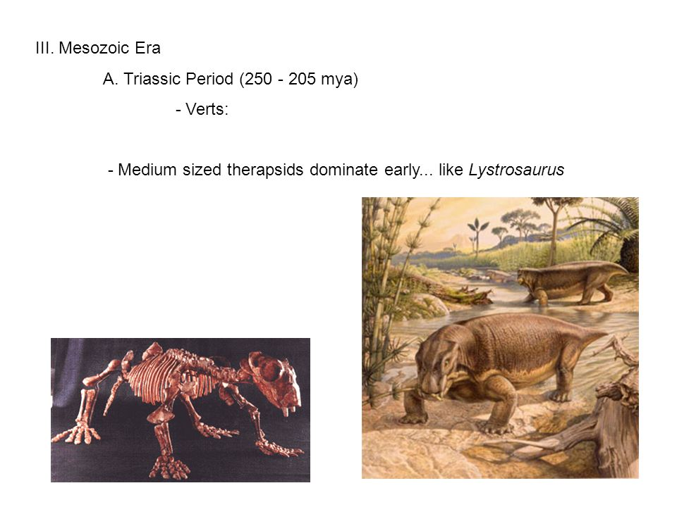 Triassic survivors Mammals Gorgonopsids Therapsids Pelycosaurs Dicynodonts Cynodonts