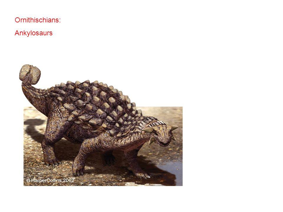 Ornithischians: Ankylosaurs