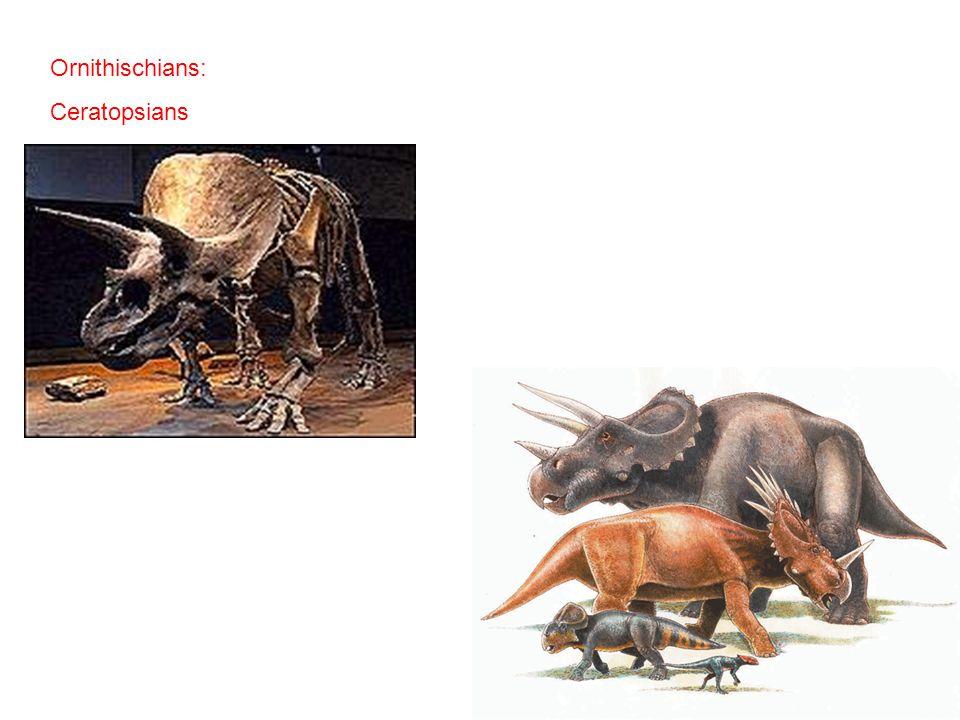 Ornithischians: Ceratopsians