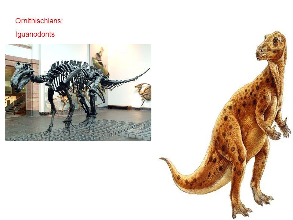 Ornithischians: Iguanodonts