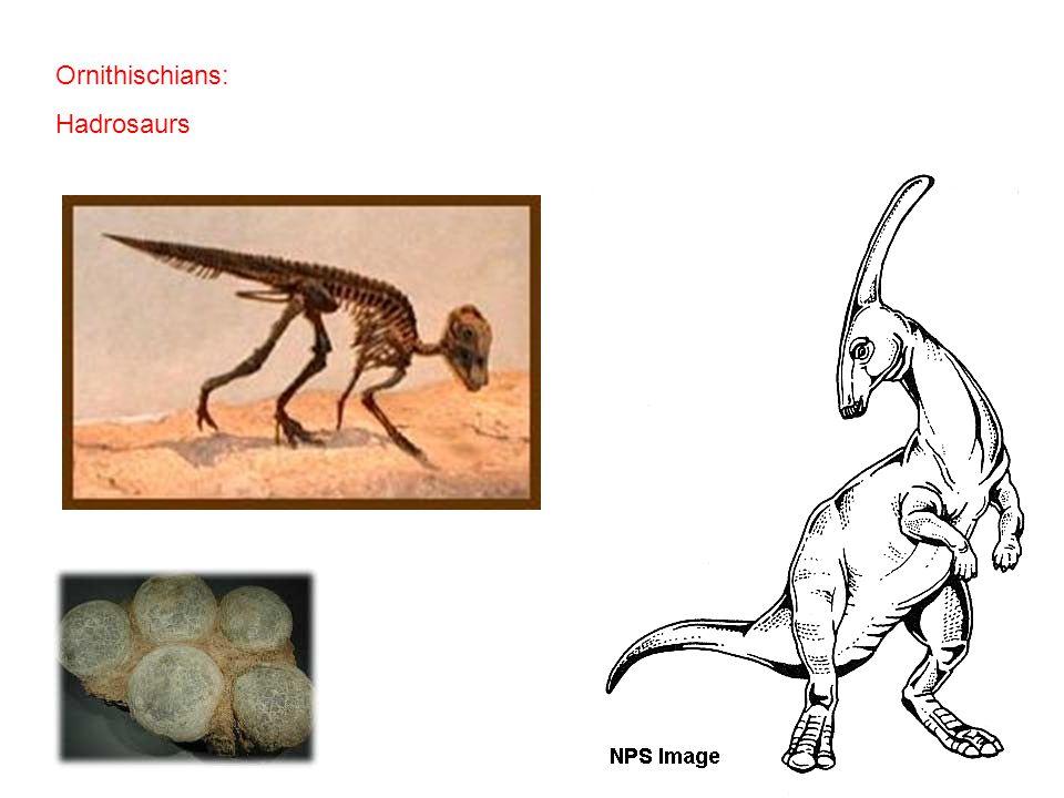 Ornithischians: Hadrosaurs