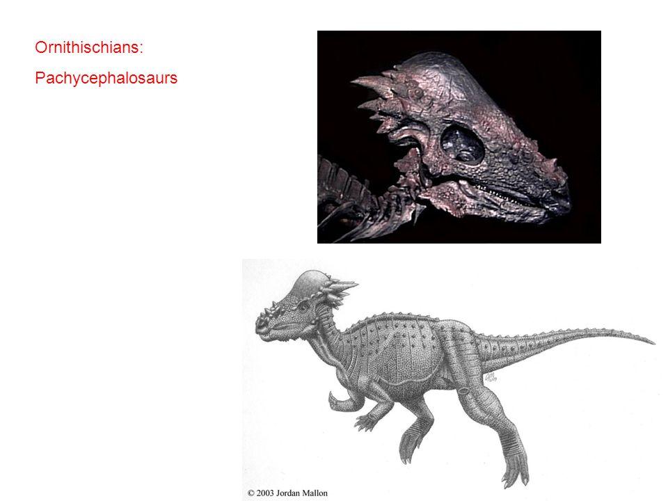 Ornithischians: Pachycephalosaurs
