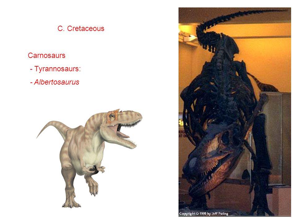 C. Cretaceous Carnosaurs - Tyrannosaurs: - Albertosaurus