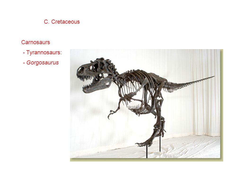 C. Cretaceous Carnosaurs - Tyrannosaurs: - Gorgosaurus