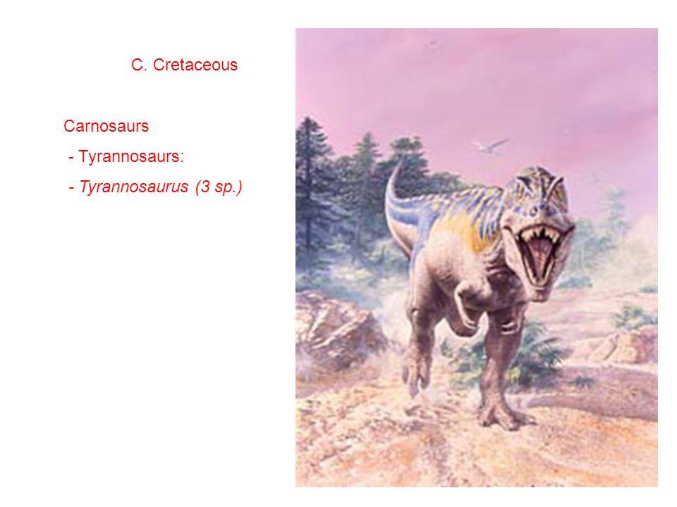 C. Cretaceous Carnosaurs - Tyrannosaurs: - Tyrannosaurus (3 sp.)